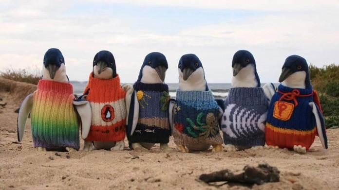 Йому 109 і він в'яже светри для пінгвінів…