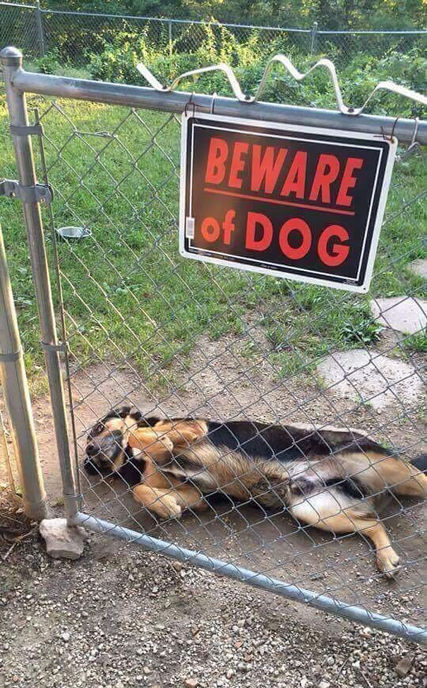 beware-of-the-dog-10-57ee55f664267__605