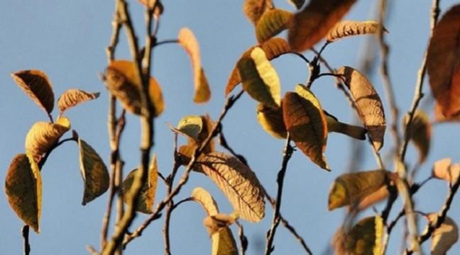 Спробуйте знайти пташку і не зламати очі