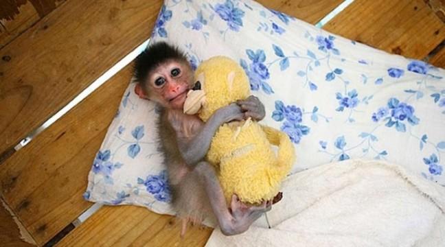 Домашні тваринки зі своїми улюбленими іграшками. 100% милості
