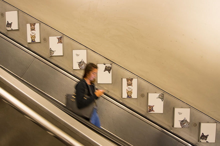 cat-ads-underground-subway-metro-london-9