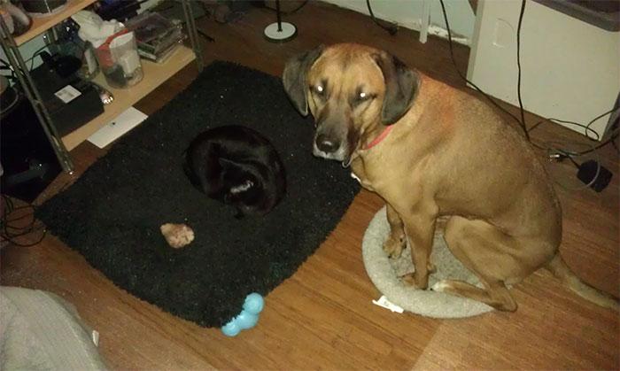 cats-stealing-dog-beds-32-57e1038da060a__700