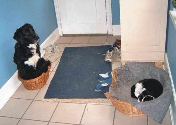 cats-stealing-dog-beds-64-57e143be4e6c2__700