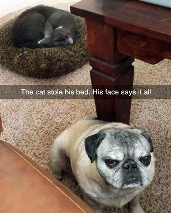 cats-stealing-dog-beds-80-57e14343be0d5__700