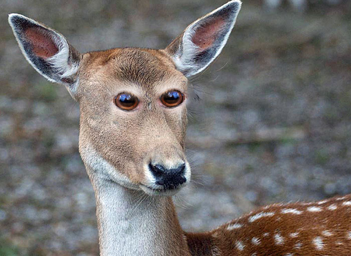 funny-animals-with-front-eyes-15-57da61d734a44__700