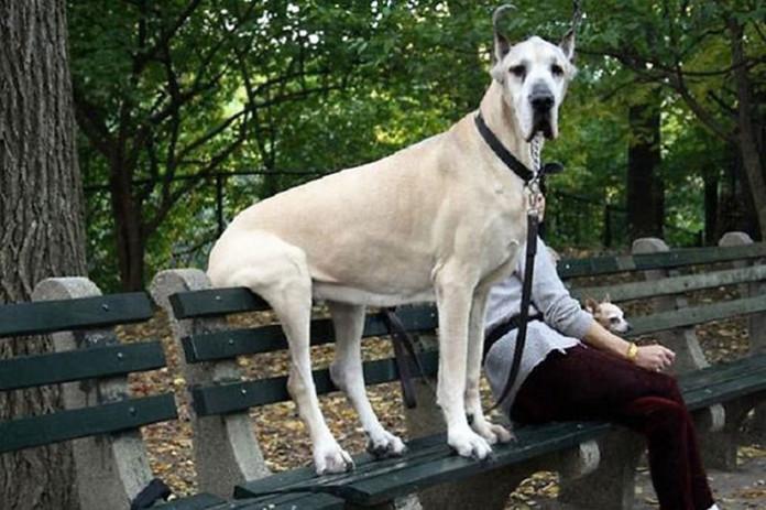 19 собак, які де захотіли – там і сіли