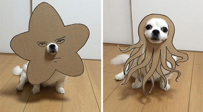 Жінка робить з картону костюми для своєї собаки і публікує фото в twitter
