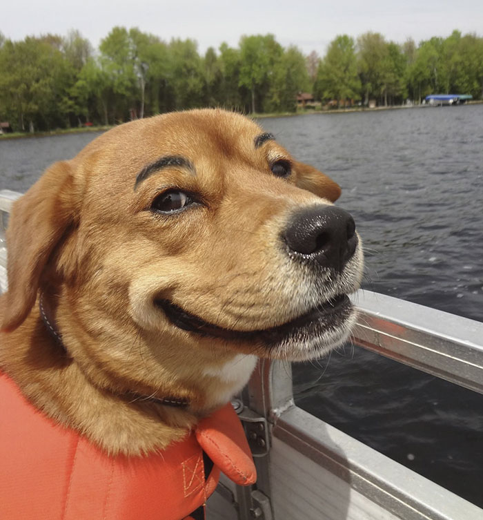 funny-dogs-with-eyebrows-26-57f39569397a1__700