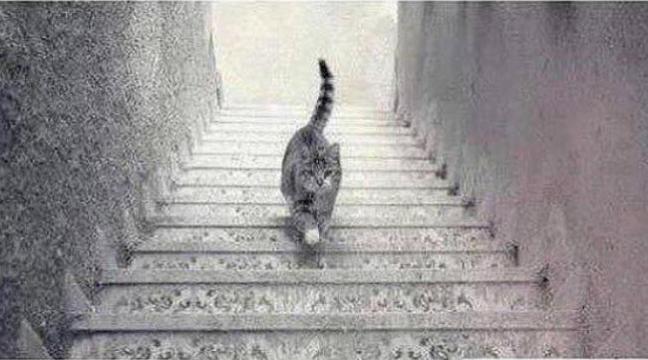 Загадка на логіку і уважність: кіт піднімається чи спускається по сходах?