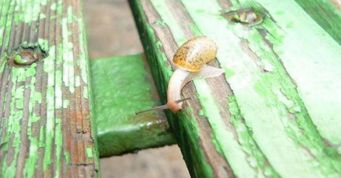 Натхненна фотоісторія про равлика, який зміг