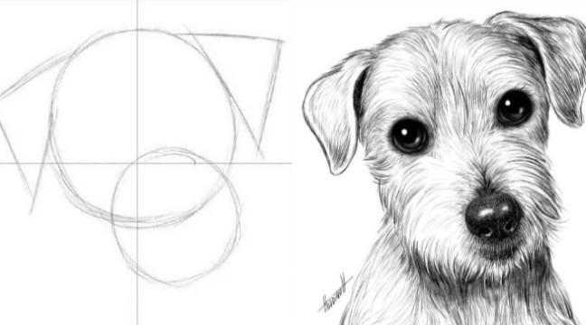 Легкий спосіб намалювати собачку (інструкція)