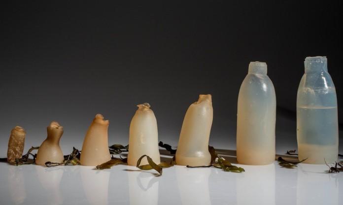 Ісландський студент винайшов екологічно чисті пляшки з водоростей