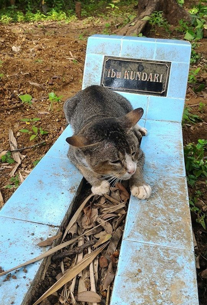 grieving-cat-spends-year-owner-grave-1a-1
