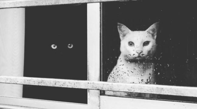 25 чорних і білих котів, які разом виглядають просто ідеально