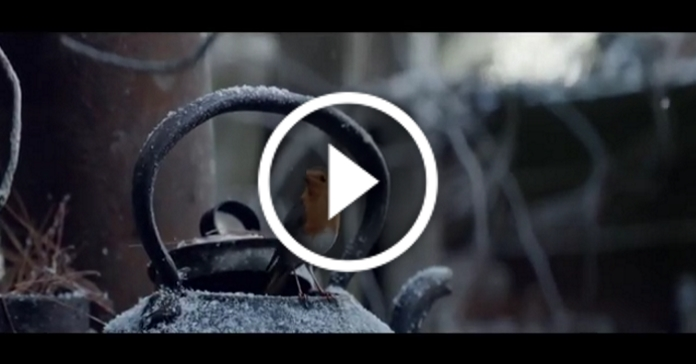 Зворушлива історія про сміливу пташечку, яка летить додому