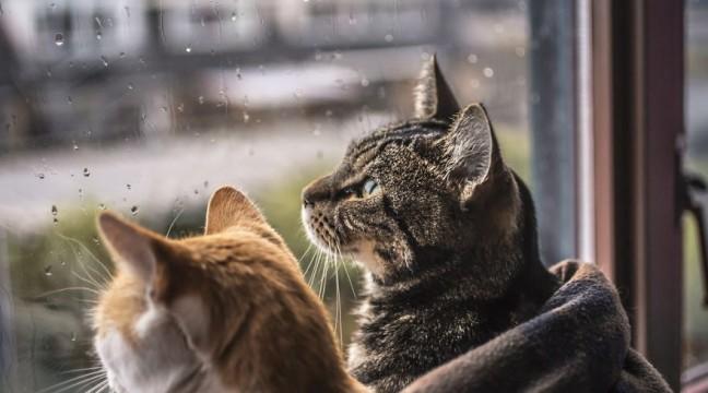 """""""Коти і дощ"""" – ліричний проект фотографа Felicity Berkleef"""