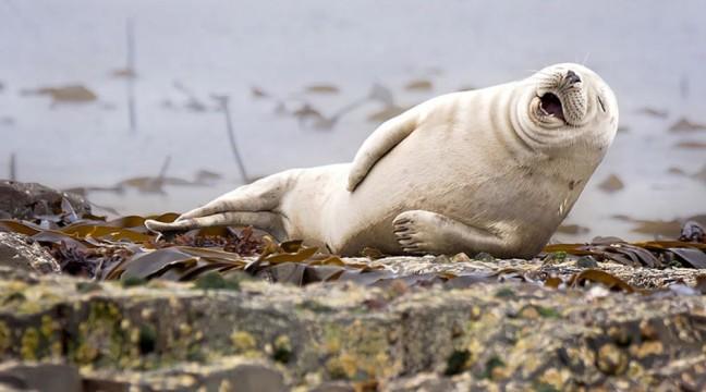 13 тварин, які нас розсмішили цього року