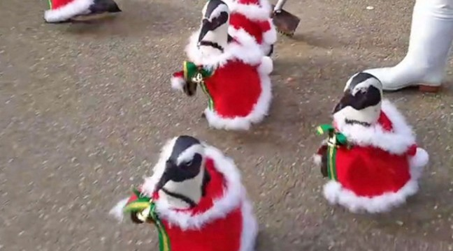 В Японії пройшов парад різдвяних пінгвінів