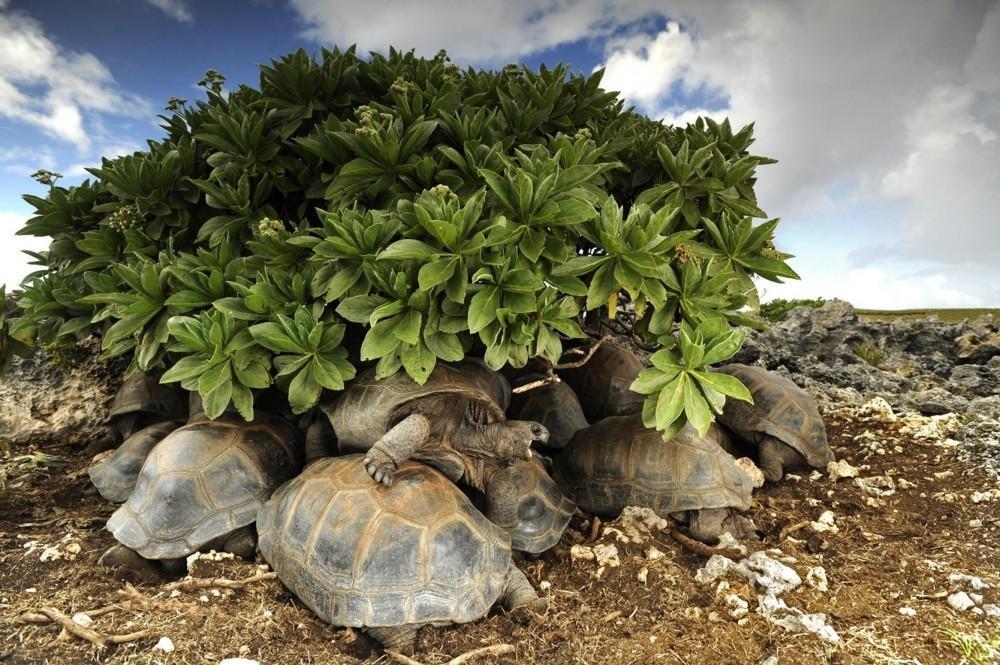 20018415-hoe-houden-reuzenschildpadden-op-de-seychellen-het-hoofd-koel-911-1481281400-1000-e9ee1b5253-1481286678