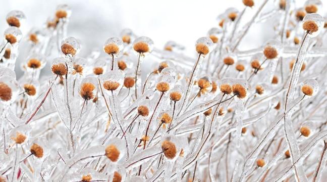 Кришталева краса замерзлої природи