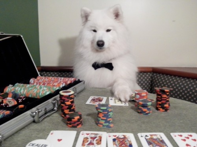 2624505-Dog-is-playing-poker-650-99103e00fa-1482222545