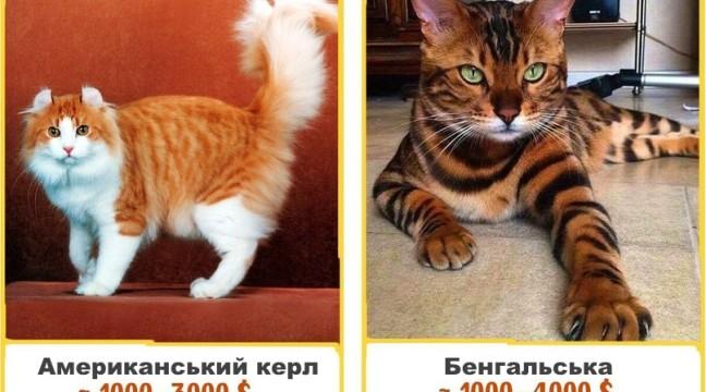 17 дивовижних кішок, які коштують цілий статок