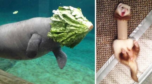 13 найсмішніших фейлів тварин