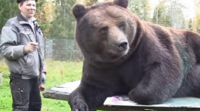 У Фінляндії на аукціоні продали картини, намальовані ведмедем