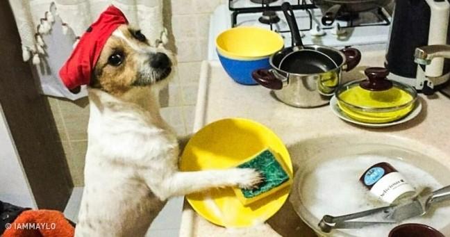 15 собак, які твердо переконані, що вони – люди