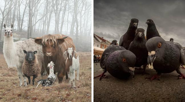Ці тварини виглядають так, наче щойно випустили свій новий музичний альбом