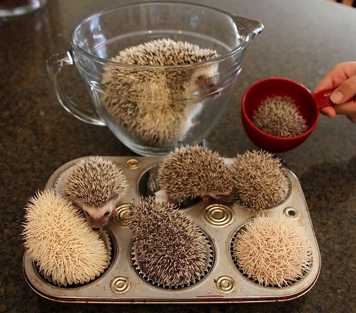 cute-hedgehog-photos-8-58930c8d063a7__700