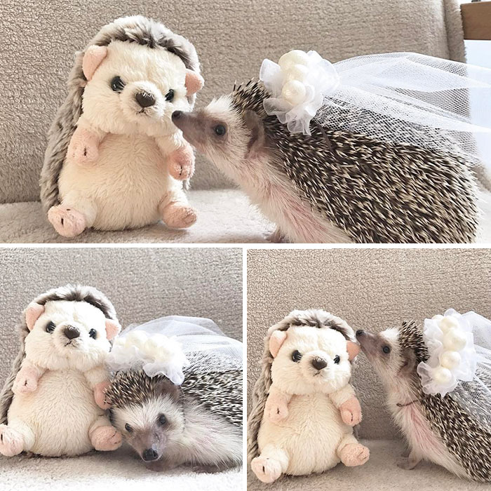 cute-hedgehogs-91-589339ad7ec98__700