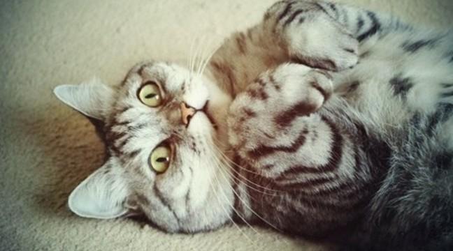 9 речей, які роблять усі власники котів