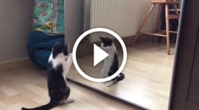 Погляньте, як наполегливо цей кіт намагається побороти своє відображення в дзеркалі
