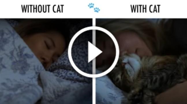 Життя з котом і без – смішне і правдиве відео