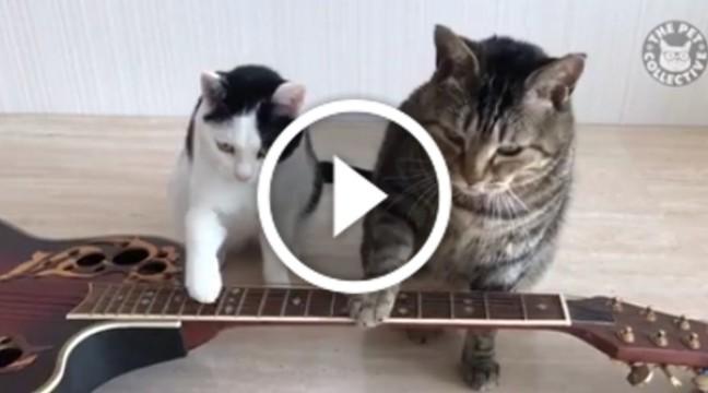 Коти виконують авторську мелодію на гітарі. Талант!