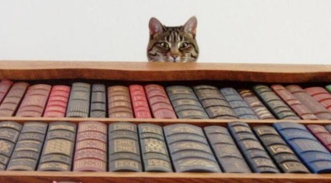 10 цікавих фактів про відомі книги. А ви це знали?