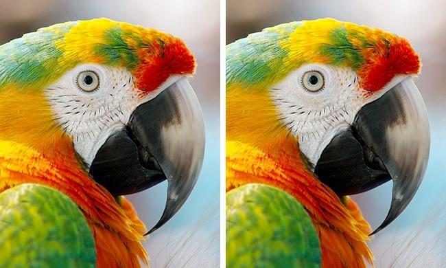 папуга1
