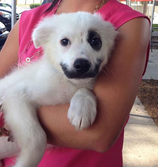 cute-puppy-day-dogs-photos-18-58d3805eb7c8e__605