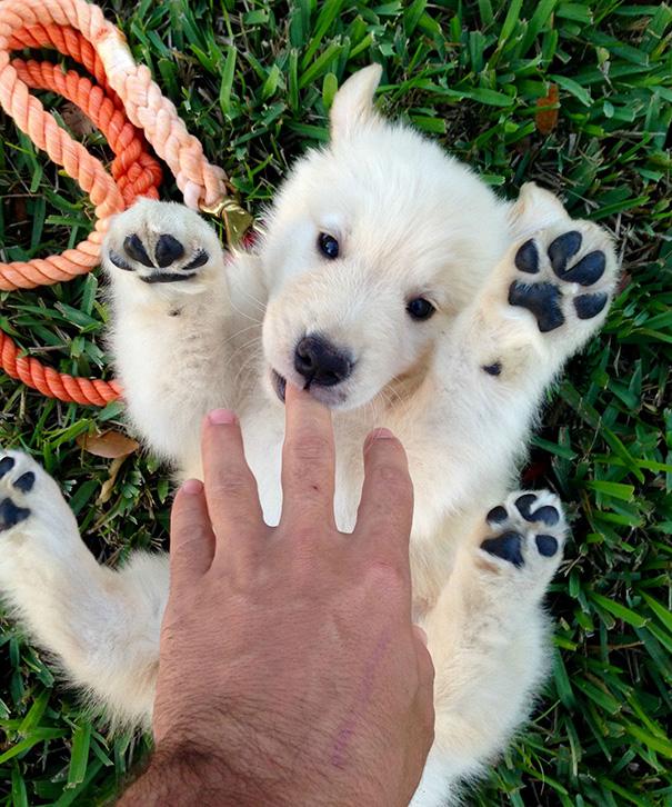 cute-puppy-day-dogs-photos-28-58d3807b7c0d3__605