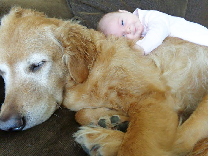 kids-dogs-sleeping-together-napping-buddies-122-58d912f70a8ce__700