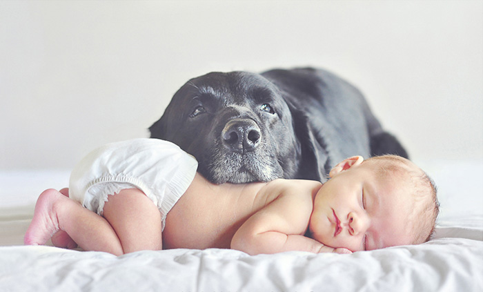 kids-dogs-sleeping-together-napping-buddies-130-58d91be82384d__700