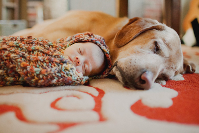 kids-dogs-sleeping-together-napping-buddies-132-58d91e69e1163__700