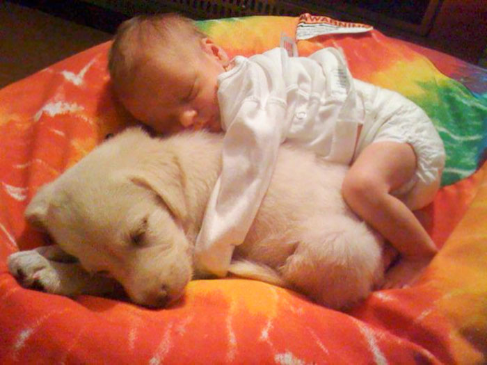 kids-dogs-sleeping-together-napping-buddies-142-58da093ca0ec3__700