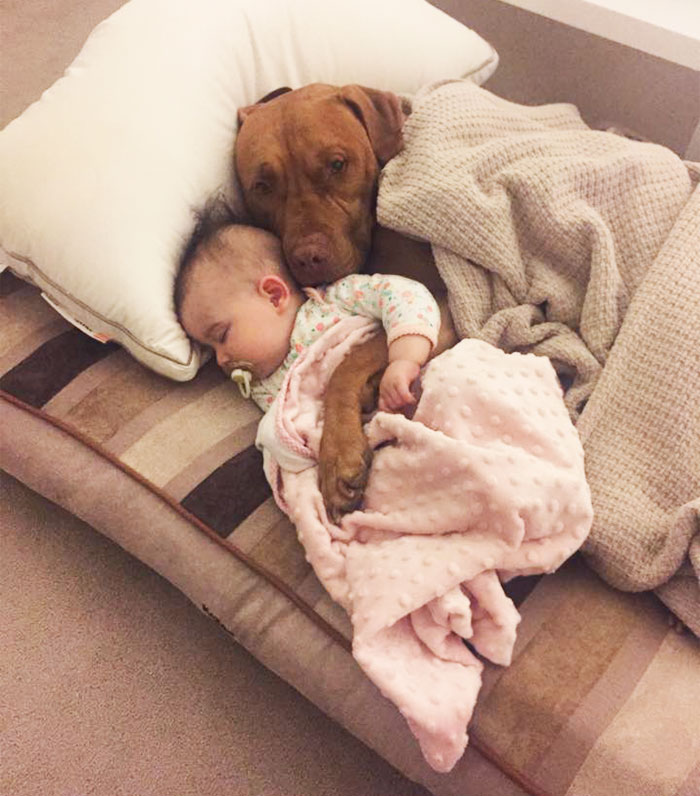 kids-dogs-sleeping-together-napping-buddies-195-58da7b26149d2__700