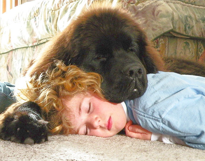 kids-dogs-sleeping-together-napping-buddies-200-58db5b26df2dc__700