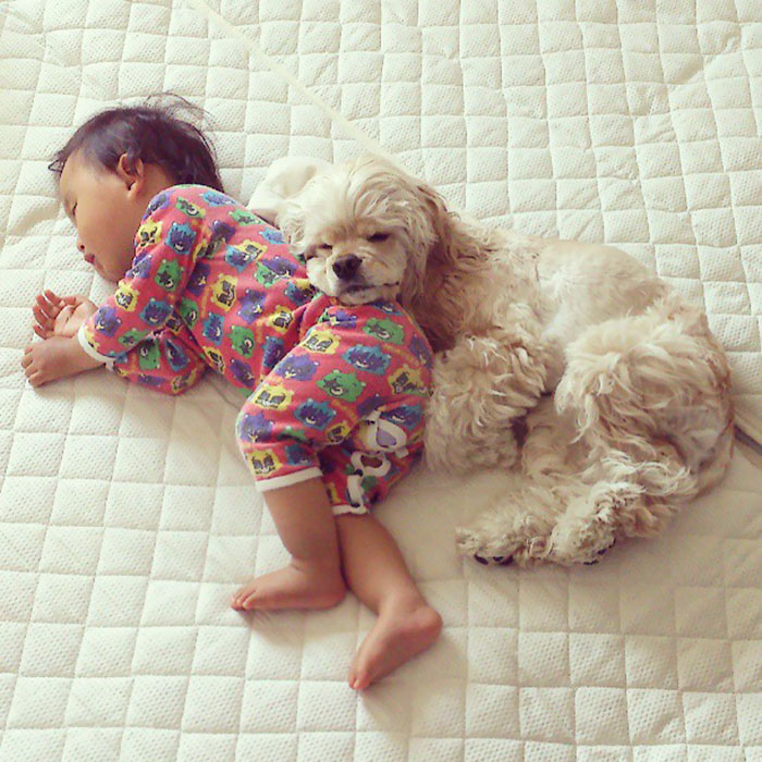 kids-dogs-sleeping-together-napping-buddies-208-58dcbf8cd4d90__700