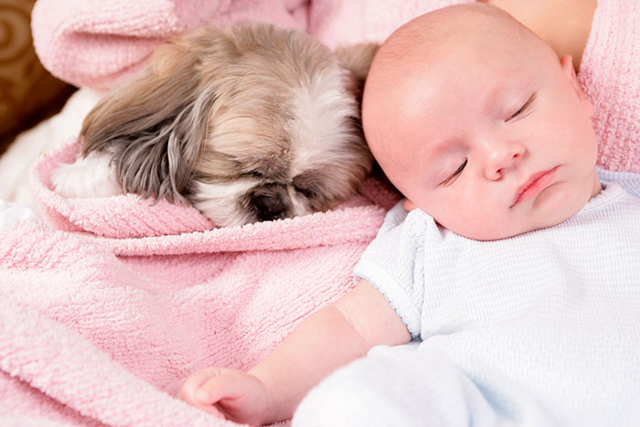 kids-dogs-sleeping-together-napping-buddies-58d8fba16e742__700