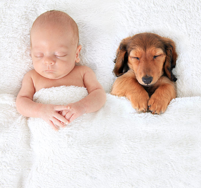 kids-dogs-sleeping-together-napping-buddies-58d904565f9be__700
