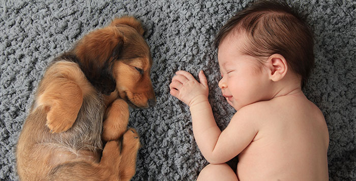 kids-dogs-sleeping-together-napping-buddies-58d908e68b485__700